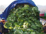 白菜はトラックや町角に山積みにされている。