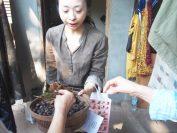 日本人スタッフから天然染織材の説明を受ける