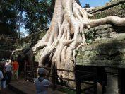 木が覆いかぶさる風景で有名なタ・プローム寺院