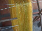 黄金の繭から取れる絹糸(精錬前)